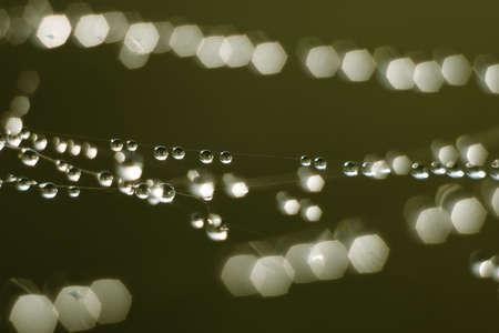 Macro photography of little rain drops photo