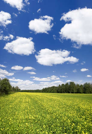 Panoramic photo of spring landscape with blue sky Stock Photo - 1281667