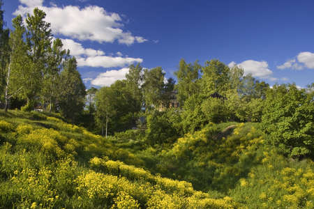Panoramic photo of spring landscape with blue sky Stock Photo - 1281668