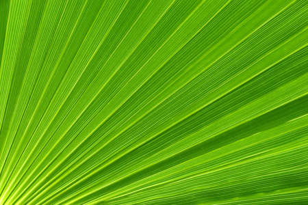 macrophotography: Palm leaf detail macrophotography