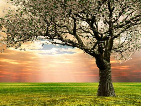 Kwitnąca wiśnia w późnych godzinach wieczornych świetle Zdjęcie Seryjne