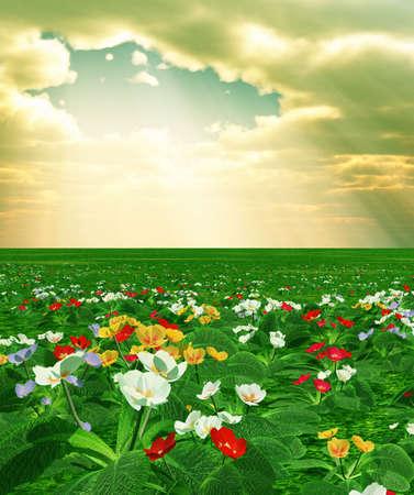 Spring scenery with primroses photo