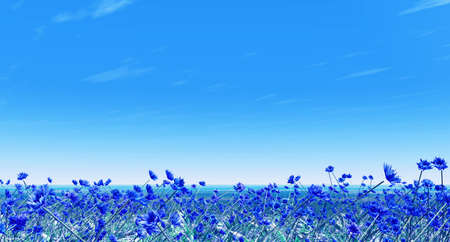 blossoming: Field of cornflowers Stock Photo