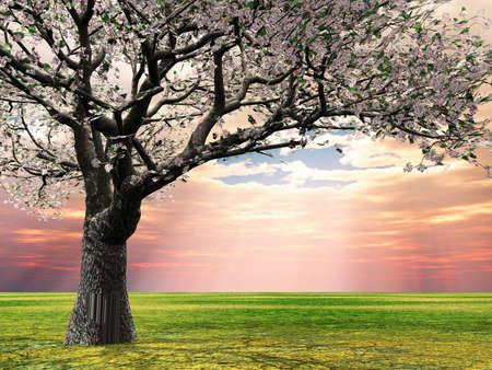 Blossoming czereśniowe drzewa w świetle późnym wieczorem