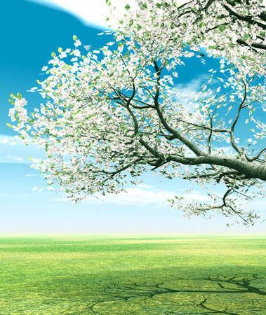 Blossoming cherry-tree photo