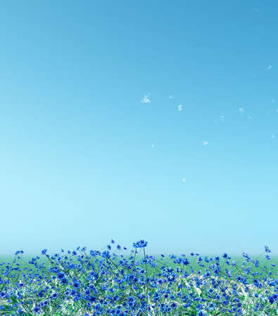 blossoming: Bluets Stock Photo