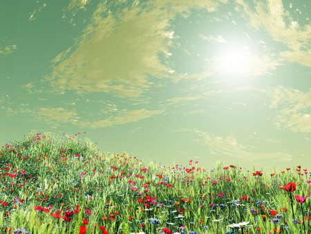 wonderful: Wonderful summer flowers Stock Photo