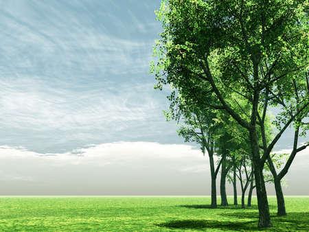 Wonderful scenery with birch trees