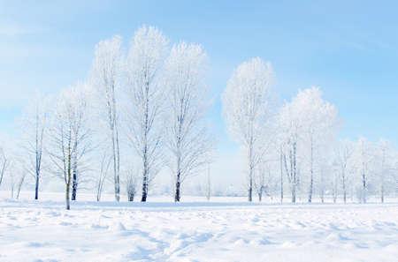 Dekoracje zimy