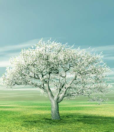 Blossoming cherry tree photo