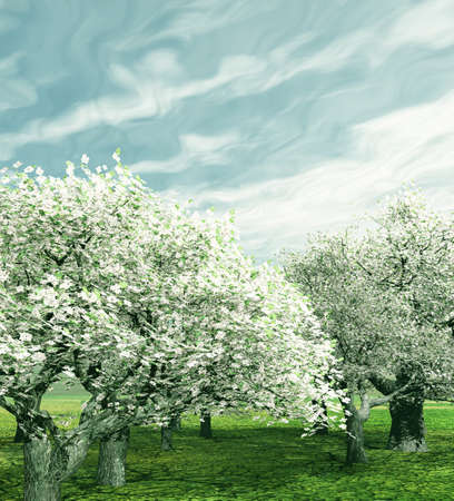 Blossoming cherry trees photo