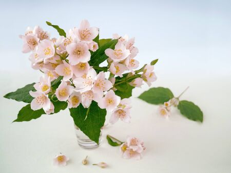 Delicate little bouquet of Jasmine flowers on a light blurred background.