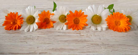 Panorama. Chamomile and calendula flowers in a row on a wooden background. Design, flower arrangement.