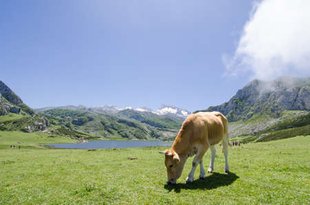 covadonga: At national park of Covadonga, Astuarias  Spain