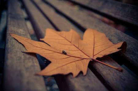 A leaf in a bank in autumn photo