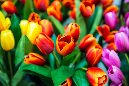 Beautiful and colorful artficial tulips  Stock Photo