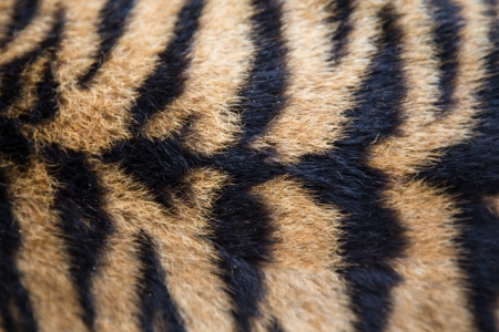 Each tiger has different stripes and marking.