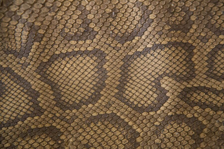 Python skin is needed for black market. Stock Photo - 26006759