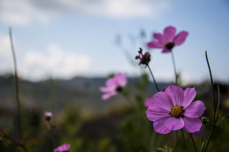 Purple flowers are blooming in spring