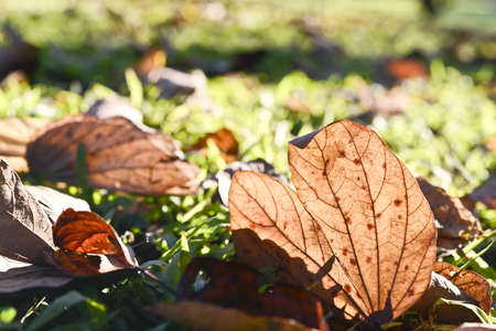 Fallen leaves in the autumn sun photo