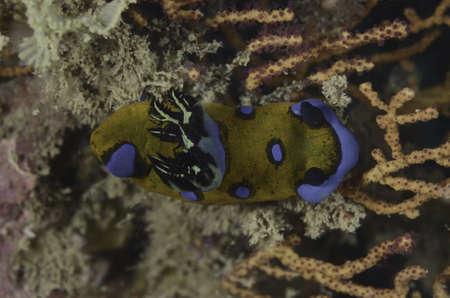 Sea slug Stock Photo - 19636543