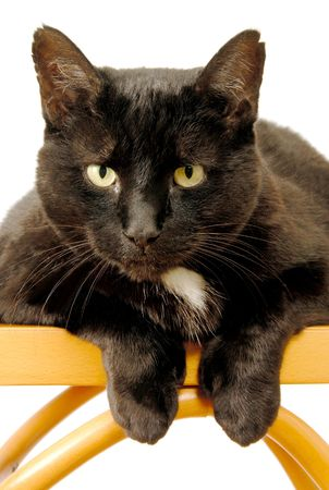 Black Cat Staring Stock Photo - 1729551