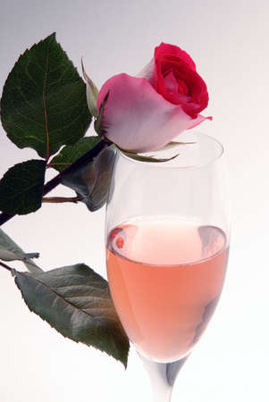 Pink Champagne and Rose photo