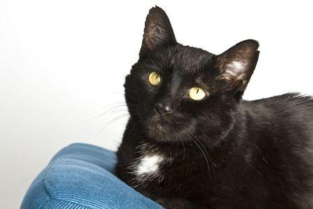 Portrait of a Black Cat Stock fotó