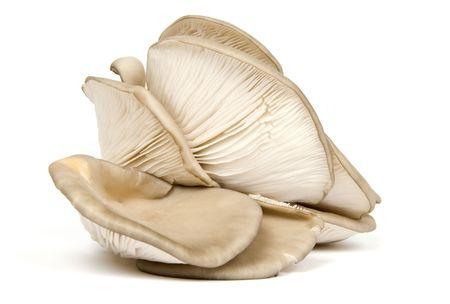 Oyster Mushrooms Stock fotó