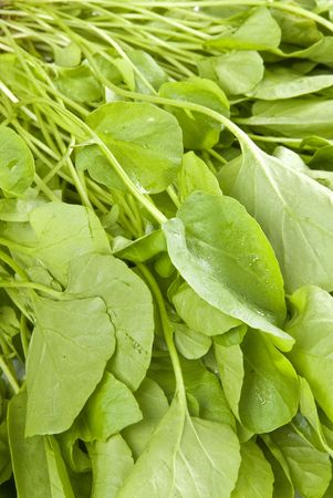 aquatic herb: Watercress