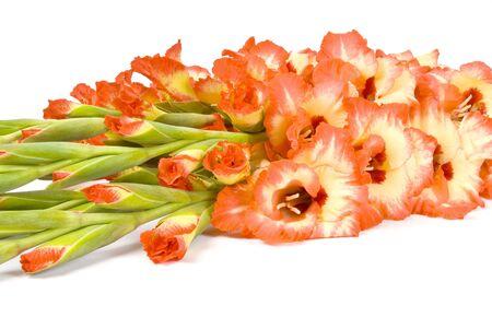 Bouquet of Gladiolus Isolated on White photo