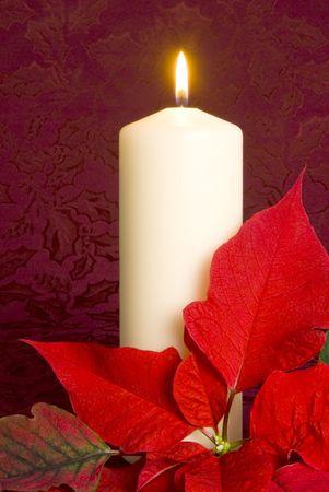 flor de pascua: Vela de Navidad y Poinsettia