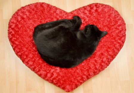 Black Cat Sleeping on a Pillow photo