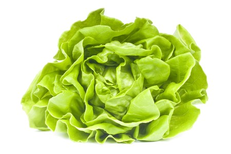 Hydroponic Lettuce Stock Photo - 7439120