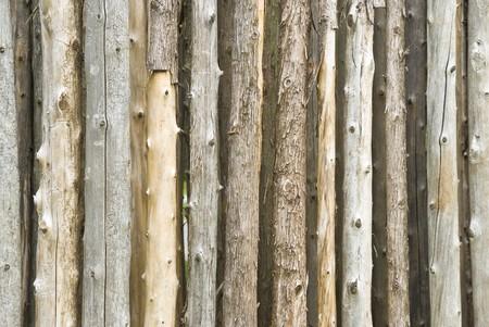 bumpy: Bare Tree Trunks Background