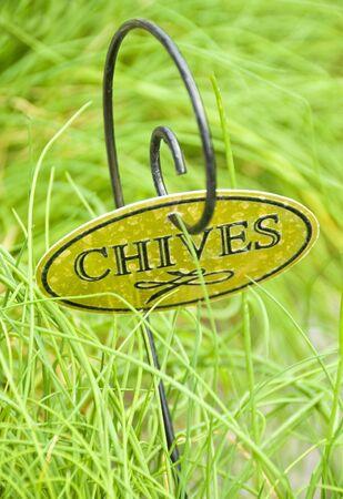 Fresh Chives Herb 版權商用圖片