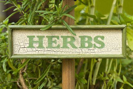 Fresh Rosemary Herb Stock fotó