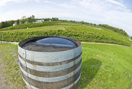 wine road: Wine Barrel in a Vineyard