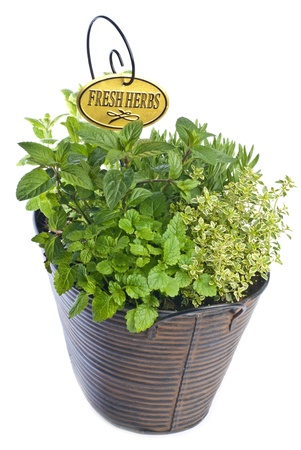 Fresh Mixed Herbs in a Basket Isolated on White