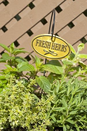 Fresh Mixed Herbs Zdjęcie Seryjne