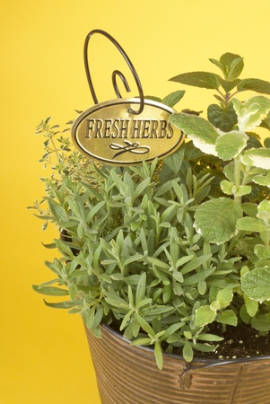 Fresh Mixed Herbs in a Rustic Metal Planter