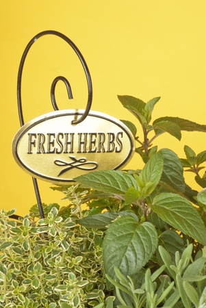 Fresh Mixed Herbs photo