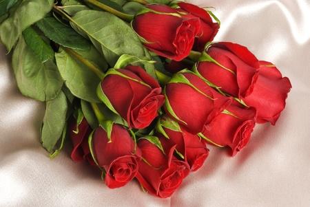 새틴에 빨간 장미