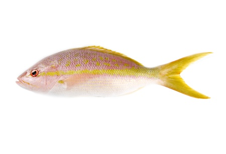 Yellow Tail Snapper Isolated on White Stock Photo - 9733185