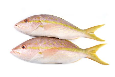 Yellow Tail Snappers Isolated on White Stock Photo - 9733195