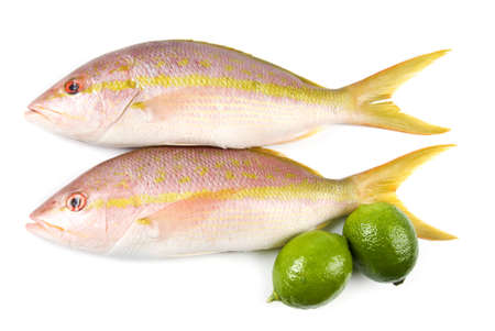 Yellow Tail Snappers Isolated on White Stock Photo - 9733416