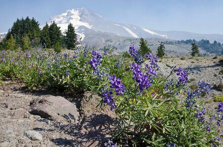 mount hood: Mount Hood Oregon Stock Photo