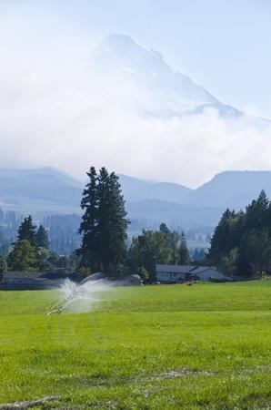 forest fire: De incendios forestales del monte Hood Foto de archivo