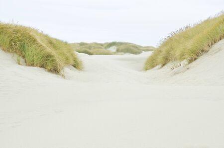 Coastal Sand Dunes of Oregon photo