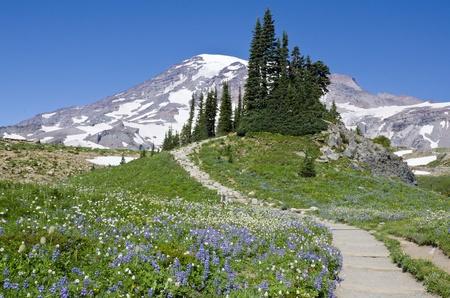 hiking path: Mount Rainier Stock Photo